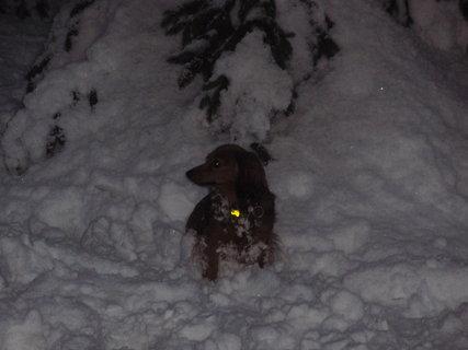 FOTKA - Bára v zimě