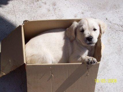 FOTKA - Alča v krabici
