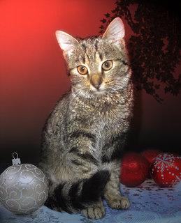 FOTKA - Naše kočička Čičinka