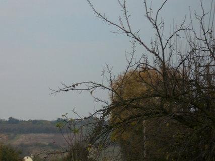 FOTKA - Podzimní stromy 1