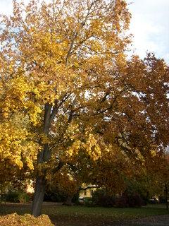 FOTKA - Podzimní stromy 3