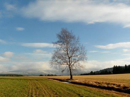 FOTKA - Samotn� b��zka mezi poli