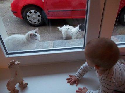 FOTKA - kočka, pes, žirafa a Nikča
