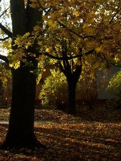 FOTKA - Podzimní stromy 6
