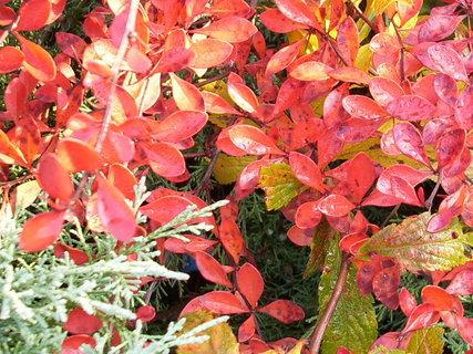 FOTKA - Další podzimní barvičky 4