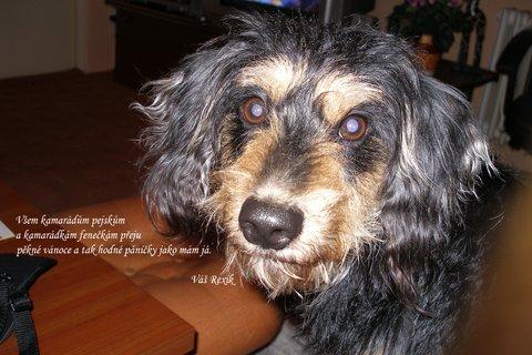 FOTKA - Krásné psí oči