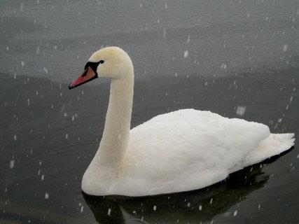 FOTKA - Začala zima 3