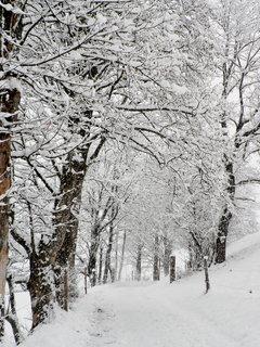 FOTKA - Začala zima 7