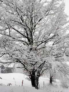 FOTKA - Začala zima 13