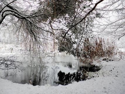 FOTKA - Začala zima 16