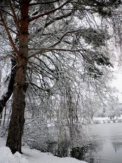 FOTKA - Začala zima 19