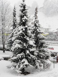 FOTKA - Začala zima 20