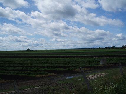 FOTKA - jahodové pole v Mažicích