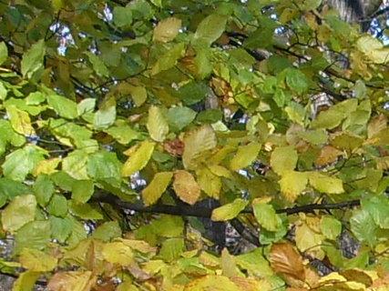 FOTKA - Další podzimní barvičky 6