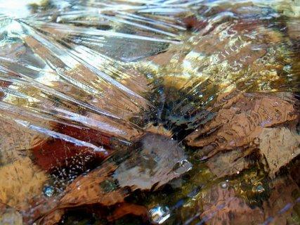 FOTKA - Listí pod ledem