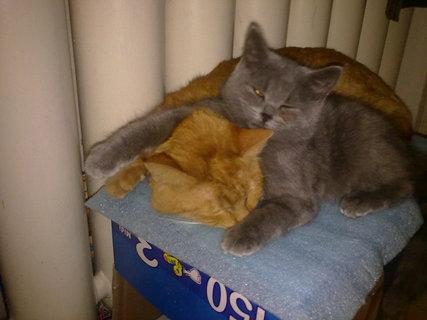 FOTKA - naše kočky