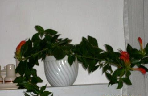 FOTKA - Květina na poličce