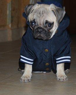 FOTKA - štěně Fido