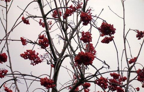 FOTKA - Podzimní barvičky  16
