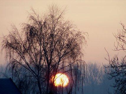 FOTKA - Slunce v koruně břízy