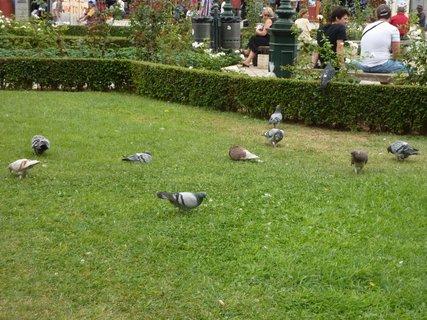 FOTKA - Soluň - holubi v parku