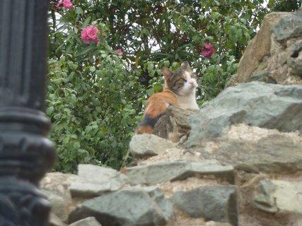 FOTKA - Soluňská kočka