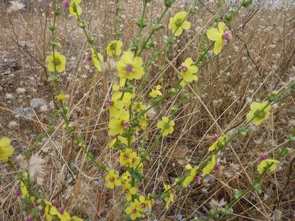 FOTKA - Flora Leptokarie I