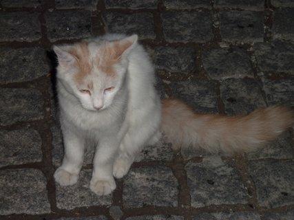 FOTKA - Kočka z Leptokarie I