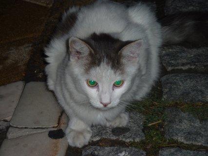 FOTKA - Kočka z Leptokarie II