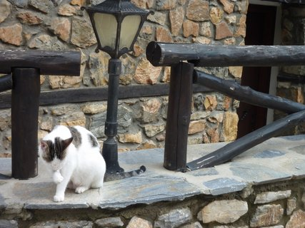 FOTKA - Kočka z Palias Pandeleimonas I