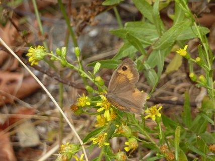 FOTKA - Flora a fauna v Palias Pandeleimonas