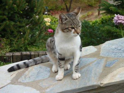 FOTKA - Kočka z Palias Pandeleimonas II