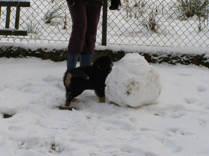 FOTKA - postavím si sněhuláka