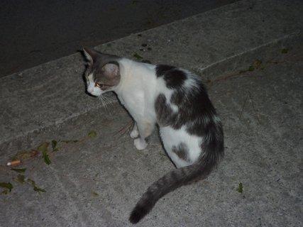FOTKA - Kočka z Leptokarie III
