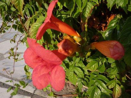 FOTKA - Flora Leptokarie III