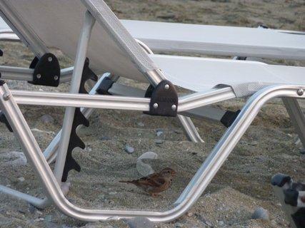 FOTKA - Vrabec z Leptokarie