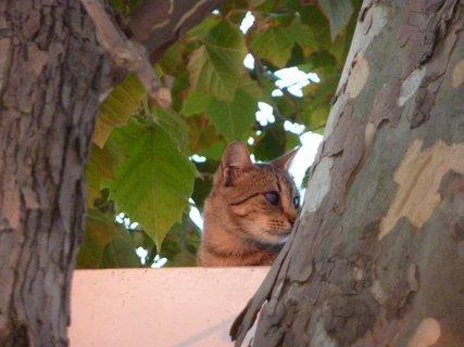 FOTKA - Kočka z Leptokarie IV