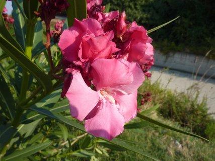 FOTKA - Flora Leptokarie VI