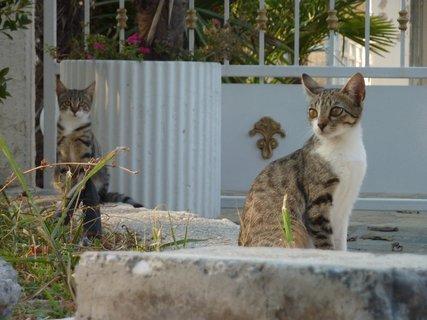 FOTKA - Kočky z Leptokarie
