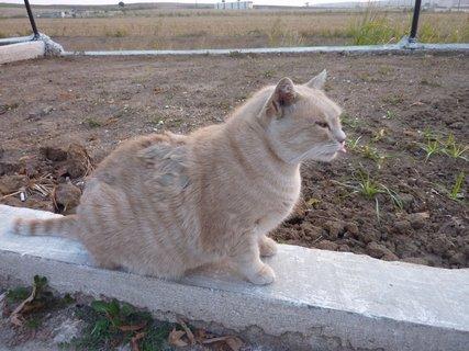 FOTKA - Řecká kočka