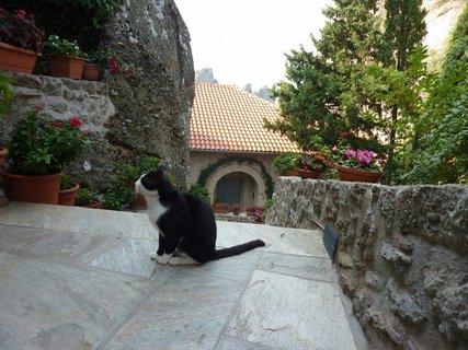 FOTKA - Kočka z Meteora klášterů
