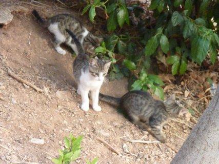 FOTKA - Koťata z Delf