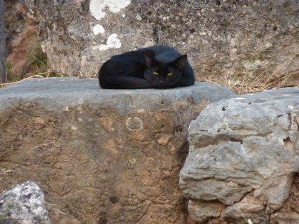 FOTKA - Kočka z Delf