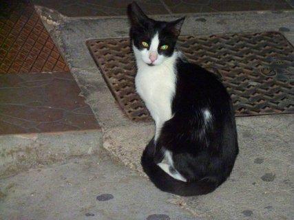 FOTKA - Kočka z Tola