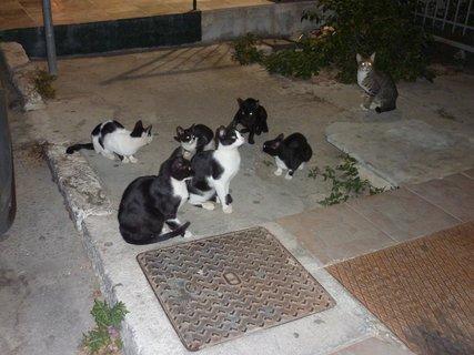 FOTKA - Kočky z Tola