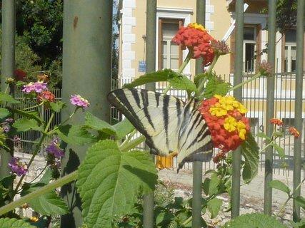 FOTKA - Flora a fauna Atén I