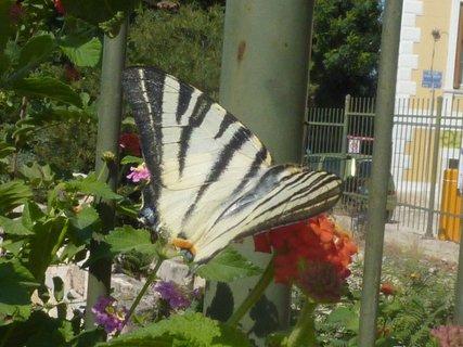 FOTKA - Flora a fauna Atén II