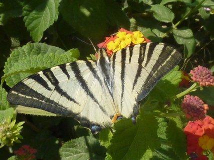 FOTKA - Flora a fauna Atén III