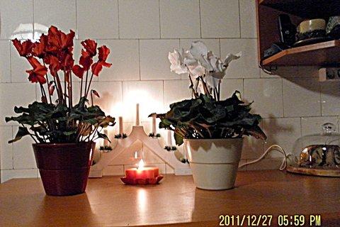 FOTKA - Brambořík bílý  a červený