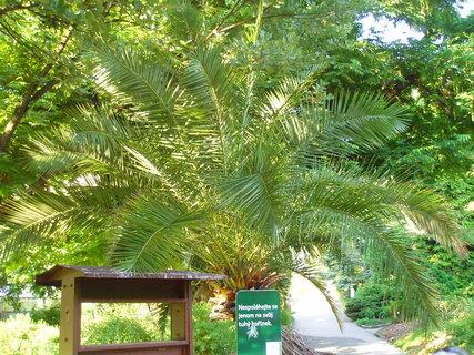 FOTKA - botanická zahrada Na slupi